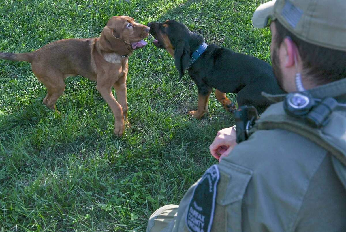 A Fairfax County Police K-9 handler plays with Luna and Duke.