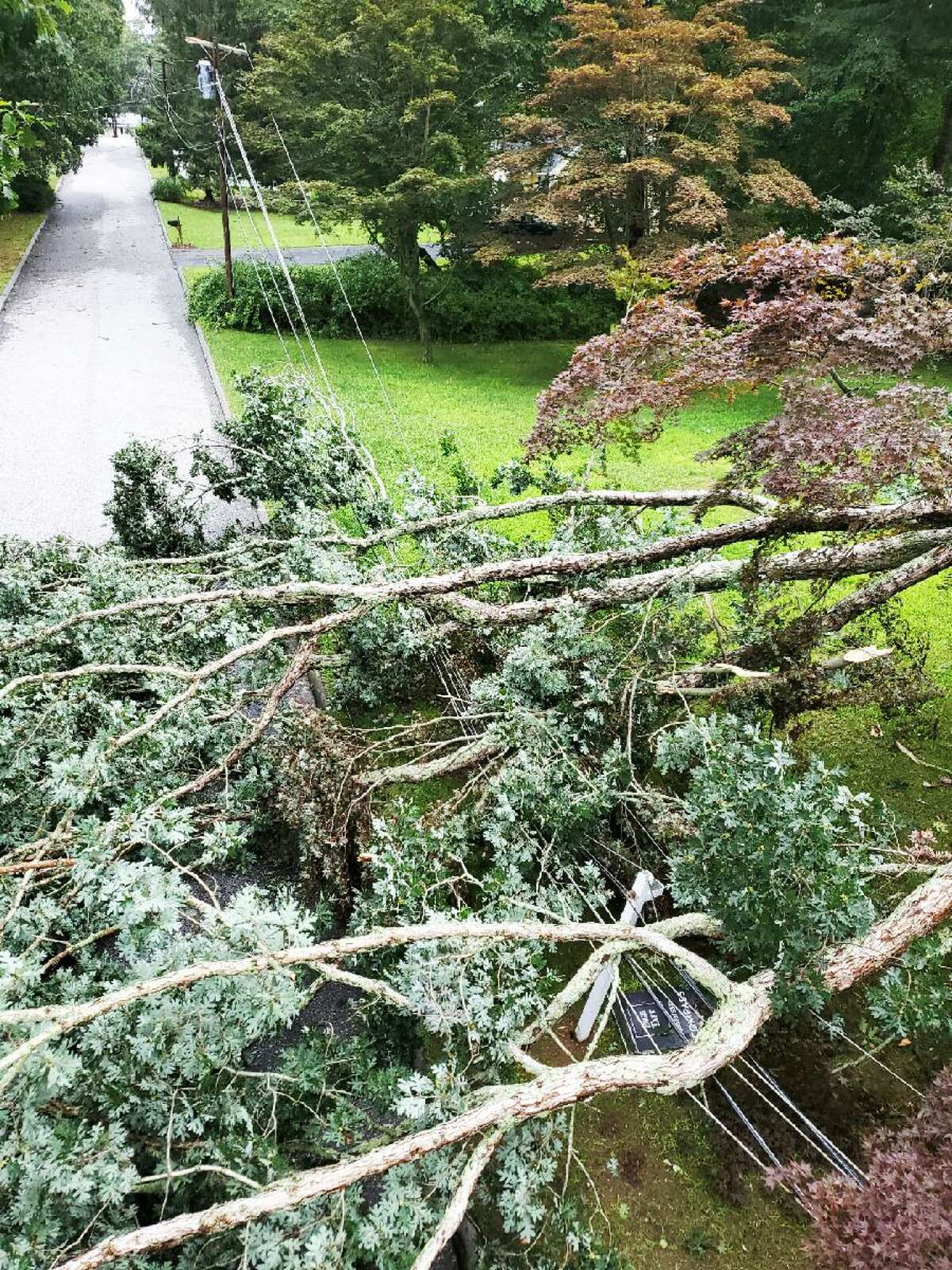 A tree that fell onto electric distribution power lines and across the road in Old Lyme during Tropical Storm Henri caused a public safety issue.