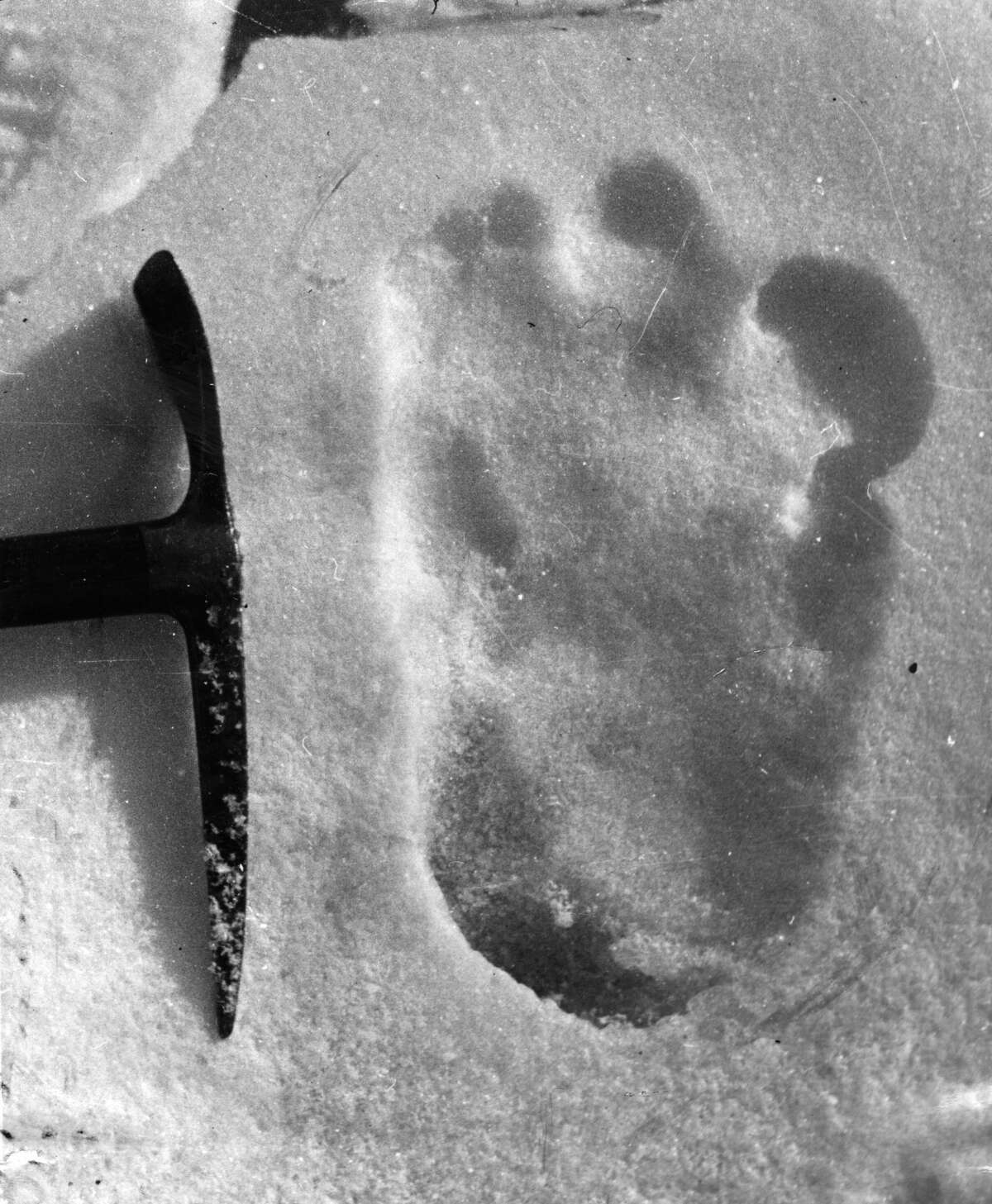 13th December 1951: The footprint of the Abominable Snowman, taken near Mount Everest. (Photo by Topical Press Agency/Getty Images)