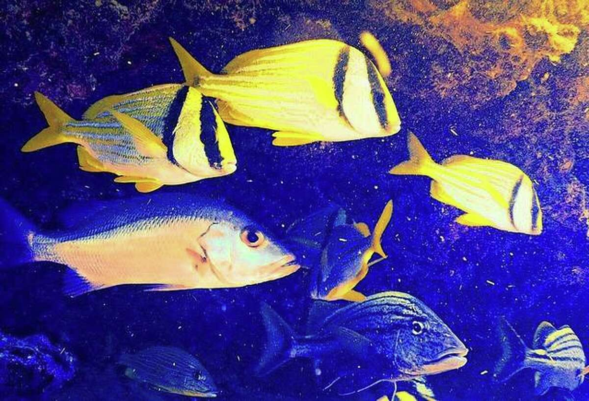 Common reef fish gather off Islamorada, a village that encompasses six of the Florida Keys. Known for its coral reefs, it is a favorite spot for reader Jerry Stocker.