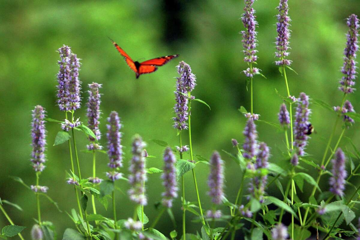 The City of Stamford is considering banning certain non-organic pesticides on city property to make the area safer for people and pollinators.