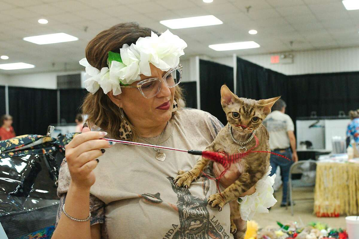 Cats, cat owners, cat breeders and cat fans gathered at the Jimmy Burke Activity Center in Deer Park Saturday, Aug. 27 2021 for the Gulf Coast Feline Foundation Meow Luau Cat Show.