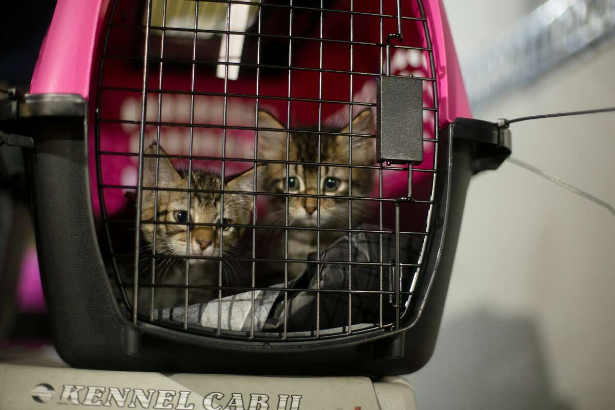 The Houston SPCA took in 138 dogs, cats and kittens from Louisiana shelters Saturday morning.