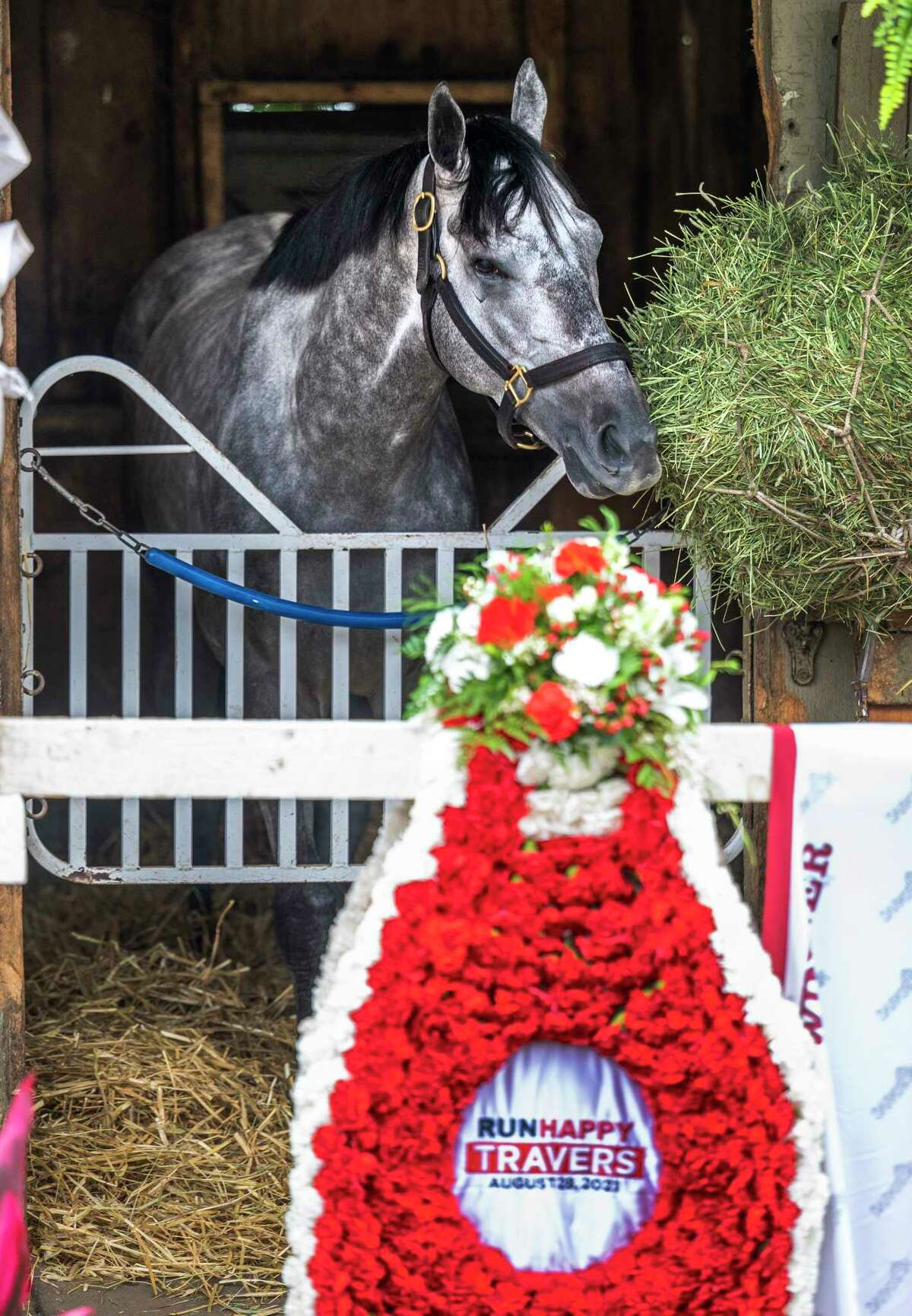 Essential Quality enjoys some hay the morning after his victory in the 152nd Runhappy Travers States at the Saratoga Race Course Sunday Aug 29, 2021 in Saratoga Springs, N.Y. Special to the Times Union Photo Special to the Times Union by Skip Dickstein