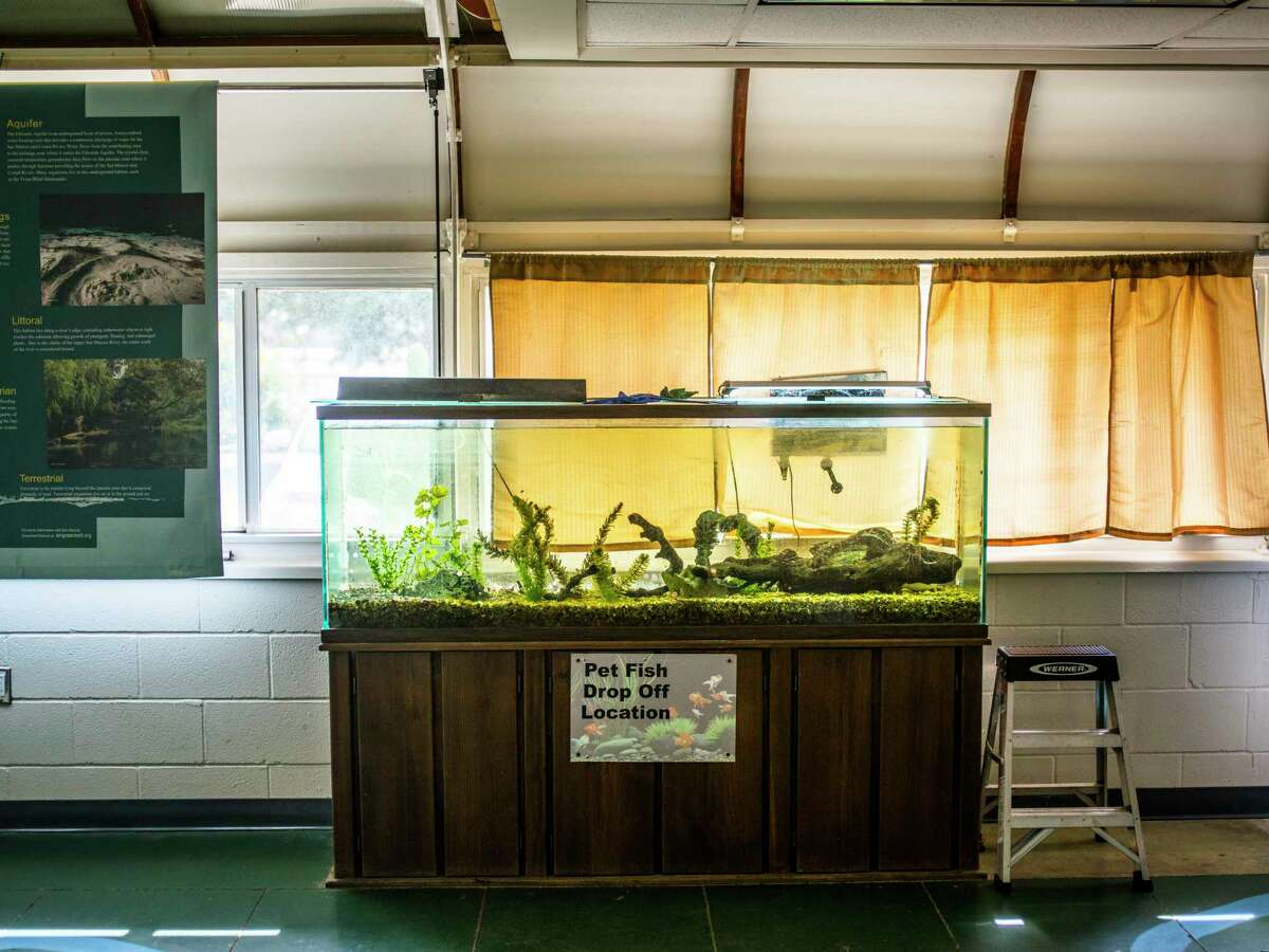 The Discovery Center in San Marcos features a location in its headquarters to drop off unwanted pet fish.