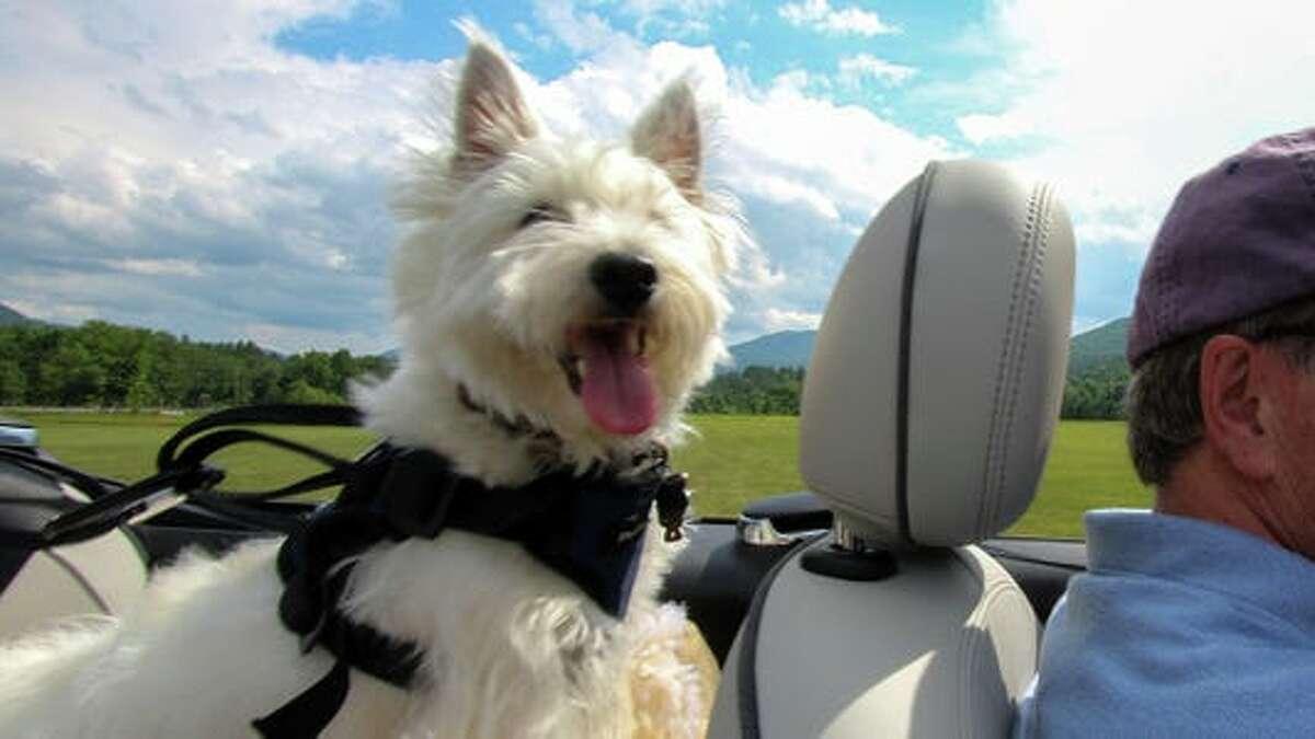 Bill Howard Best Dog Harnesses