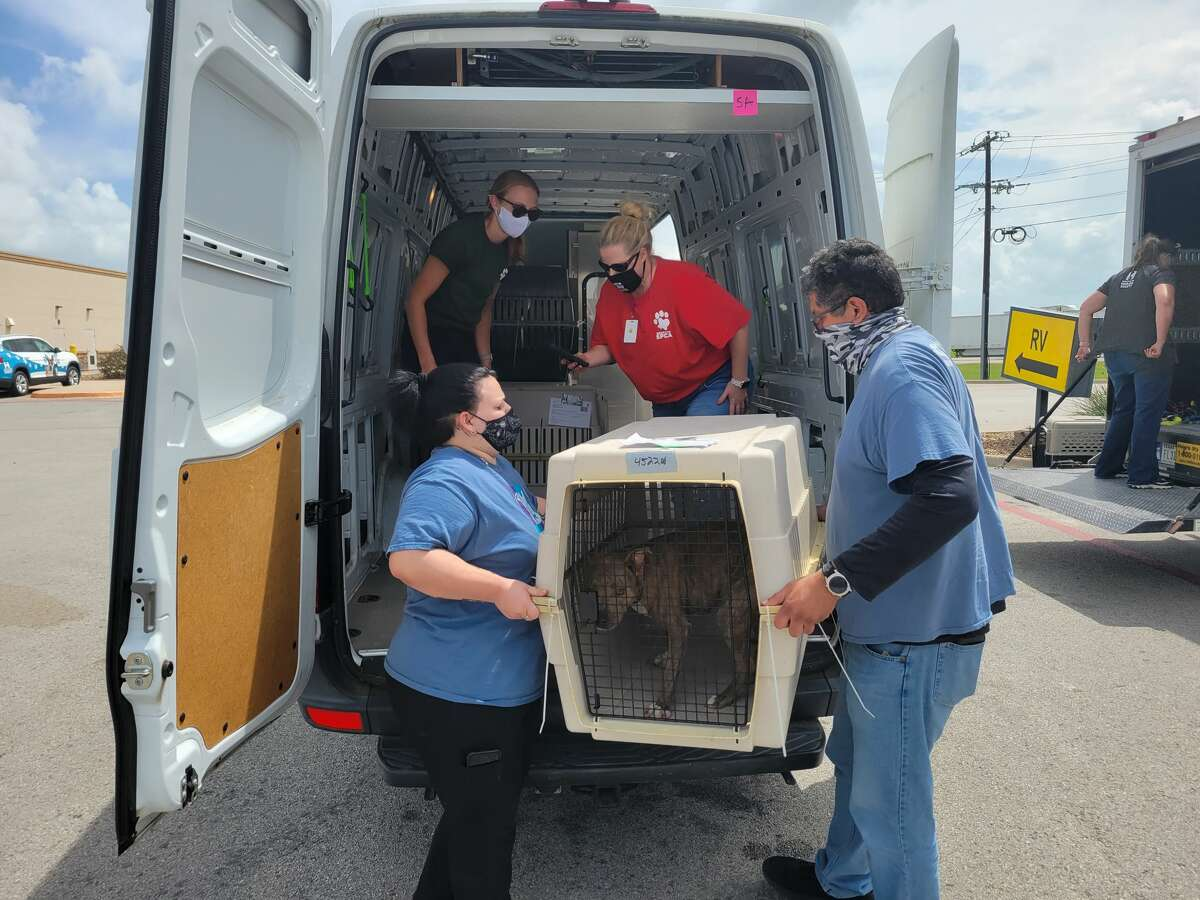 The San Antonio Humane Society transported 16 dogs to its shelter on Aug. 28 that were rescued before Hurricane Ida hit New Orleans on Sunday.