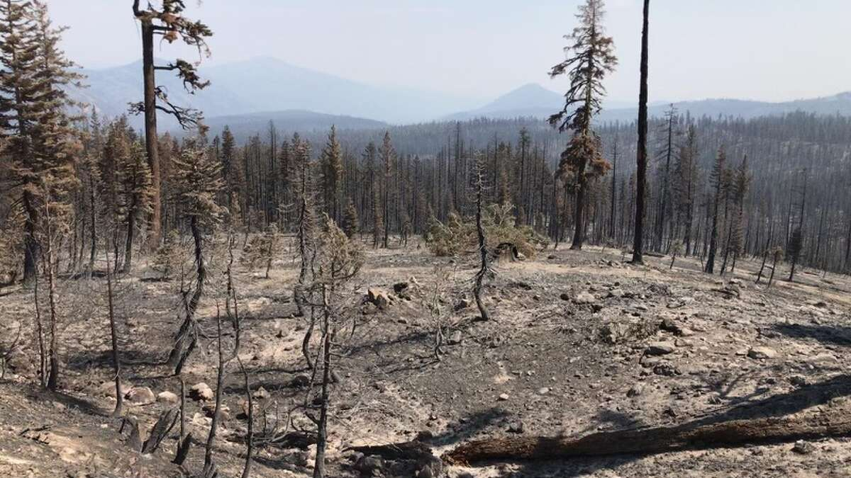 While seeing portions of the burn inside Lassen is upsetting, park officials emphasize that the entire region was once covered in volcanic ash and rock, and that the resilient park will eventually recover.