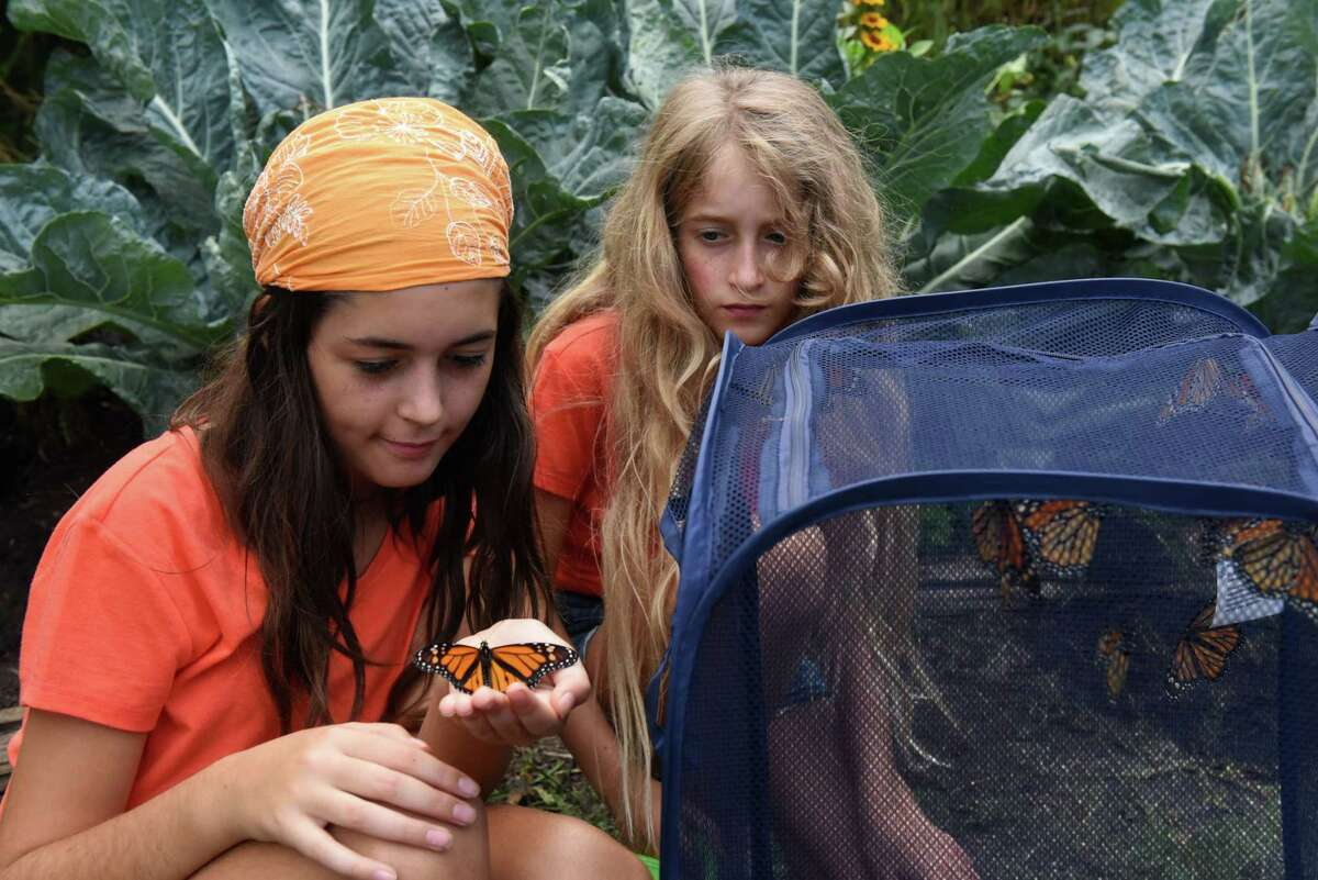 Olivia Rose, 13, holds a monarch butterfly raised at the South End Butterfly Garden by her sister Rebecca, 10, right, and mother, Laura, on Monday, Aug. 30, 2021, on Morton Ave. in Albany, N.Y.