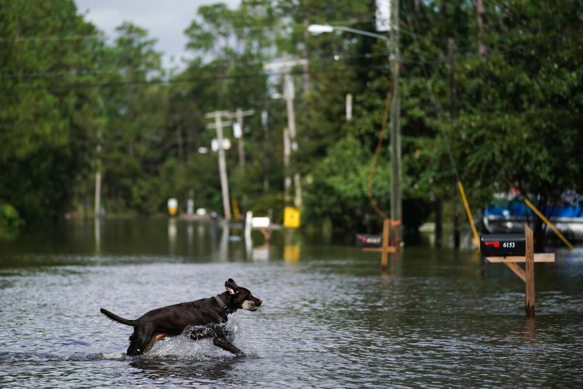 A dog plays fetch in a flooded neighborhood on August 30, 2021 in Kiln, Mississippi. (Photo by Sean Rayford/Getty Images)