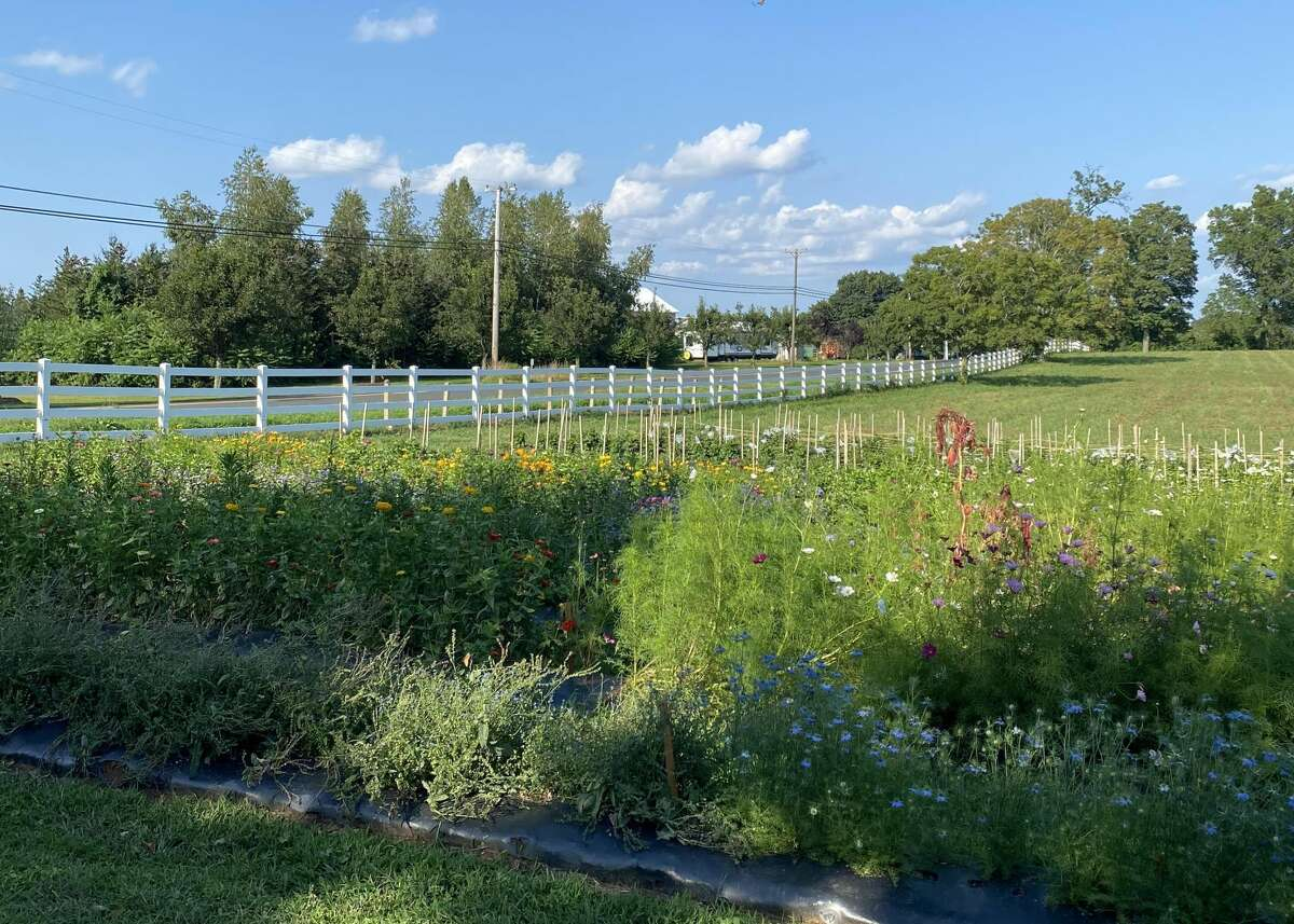Willow View Farm in West Suffield, Conn., is a pick your own flower farm owned by former WFSB host Julie Harrison.