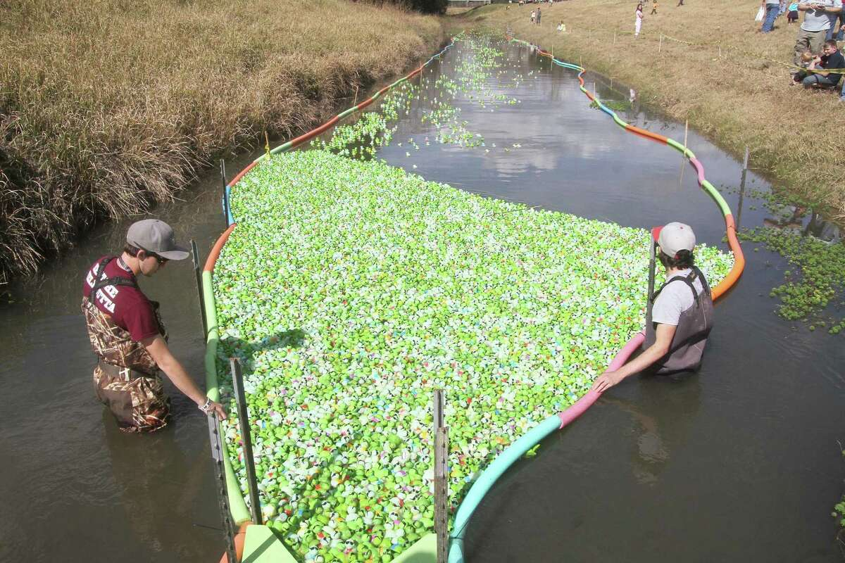 Thousands of toy plastic turtles are released in the Alvin ISD Education Foundation's annual Turtle Race & Family 5K. The next one is scheduled for February 2022.
