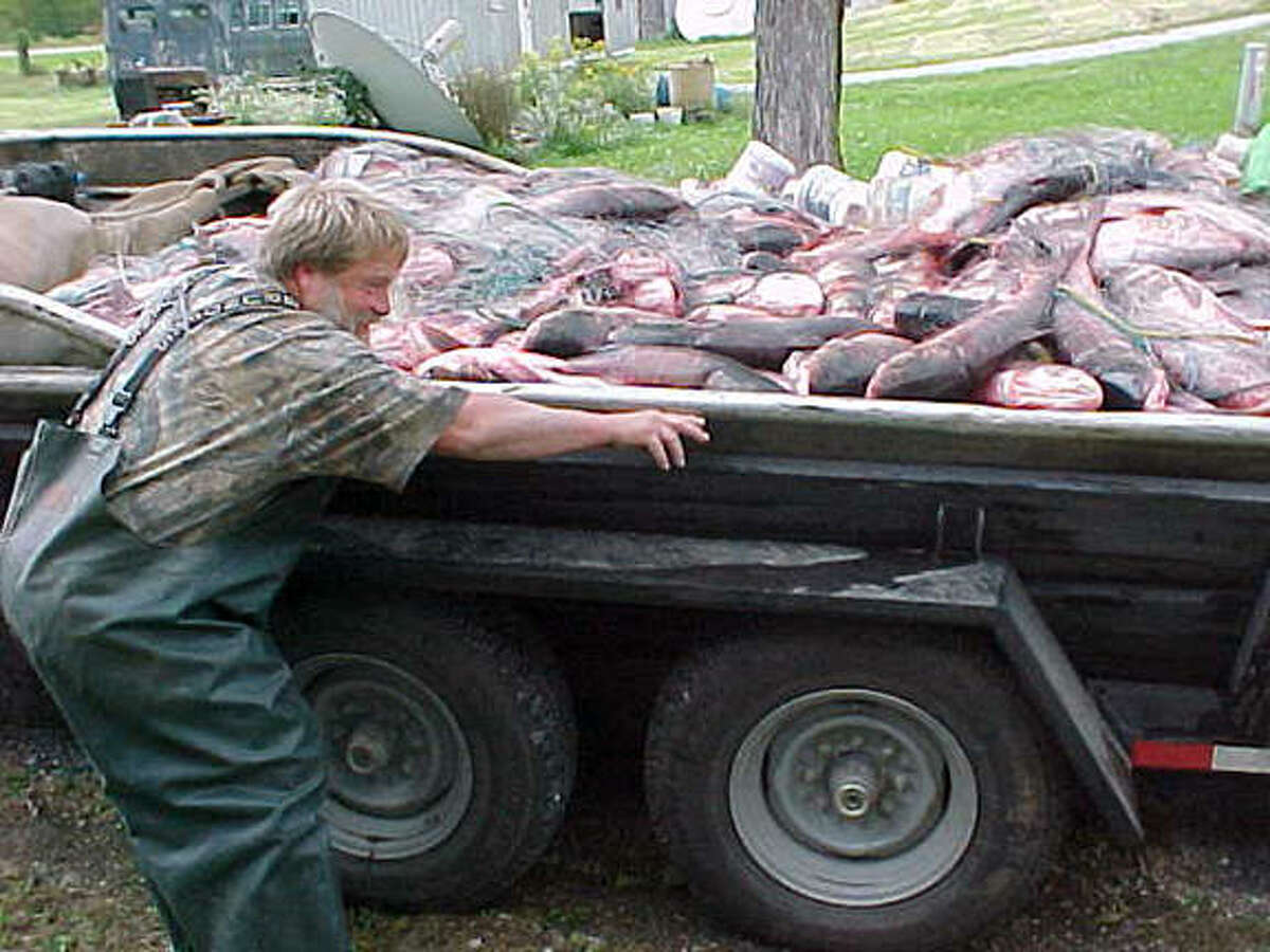 A commercial fisher on the Illinois River with a huge catch of bighead and silver carp. Carp are considered an invasive fish in Illinois and are a concern for scientists monitoring water quality.
