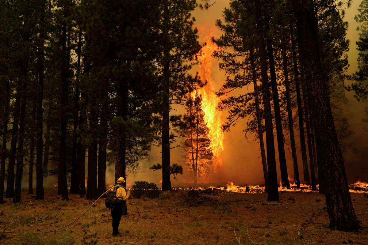 A tree flares up as firefighters continue to battle the Caldor Fire near South Lake Tahoe, Calif., Tuesday, Aug. 31, 2021. A huge firefighting force gathered Tuesday to defend Lake Tahoe from the raging wildfire that forced the evacuation of California communities on the south end of the alpine resort and put others across the state line in Nevada on notice to be ready to flee.