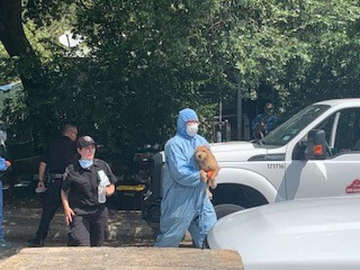 Animal Care Services seized at least 80 cats and dogs from a South Side home on Sept. 1.