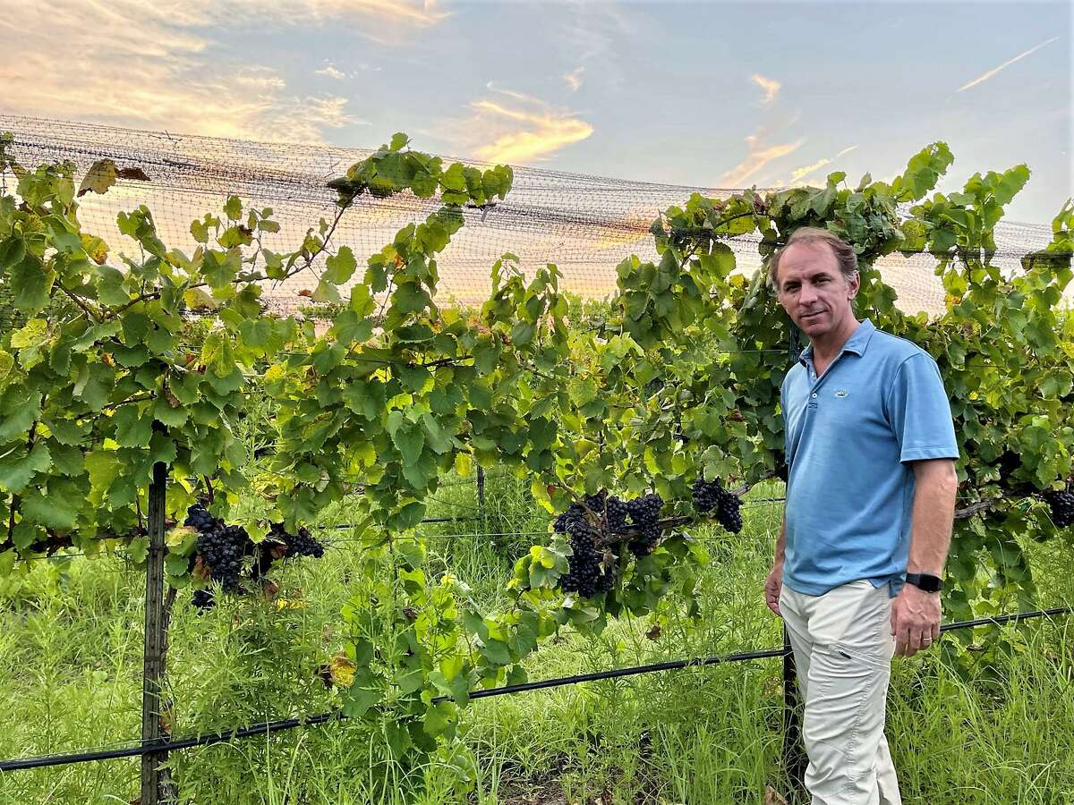 Sergio Cuadra is getting ready to pick his grapes at Salt Lick Vineyards. Sergio predicts outstanding wines will come from this harvest.