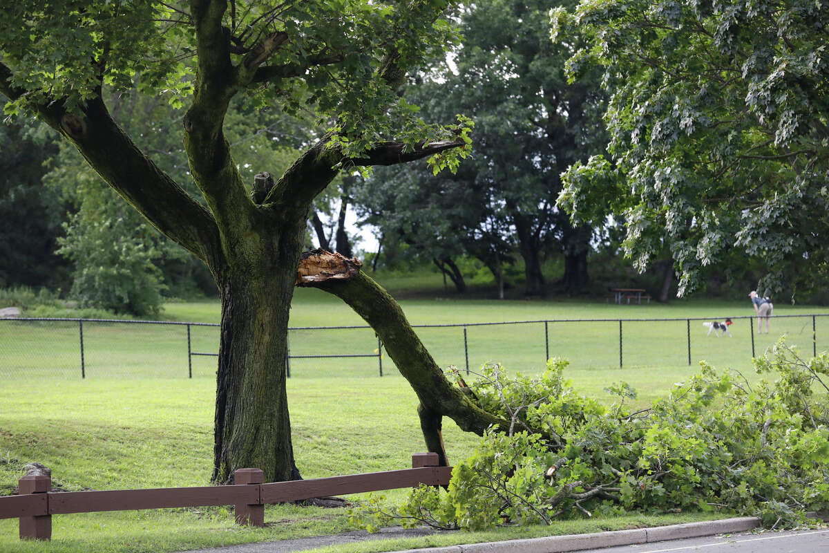 A tree is down on Beach Road in Norwalk after remnants of Ida hit Connecticut overnight on Thursday, Sept. 2, 2021.