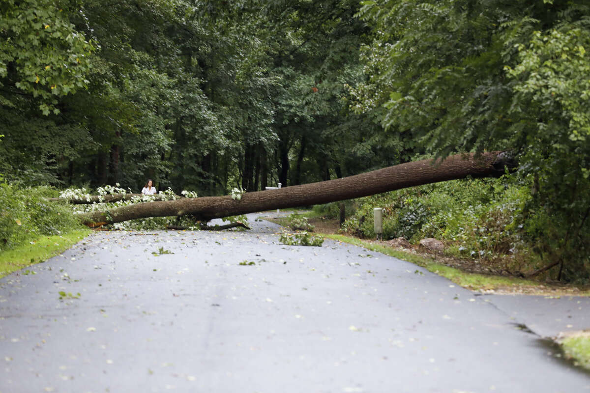A tree across the road in Wiltonafter remnants of Ida hit Connecticut overnight on Thursday, Sept. 2, 2021.