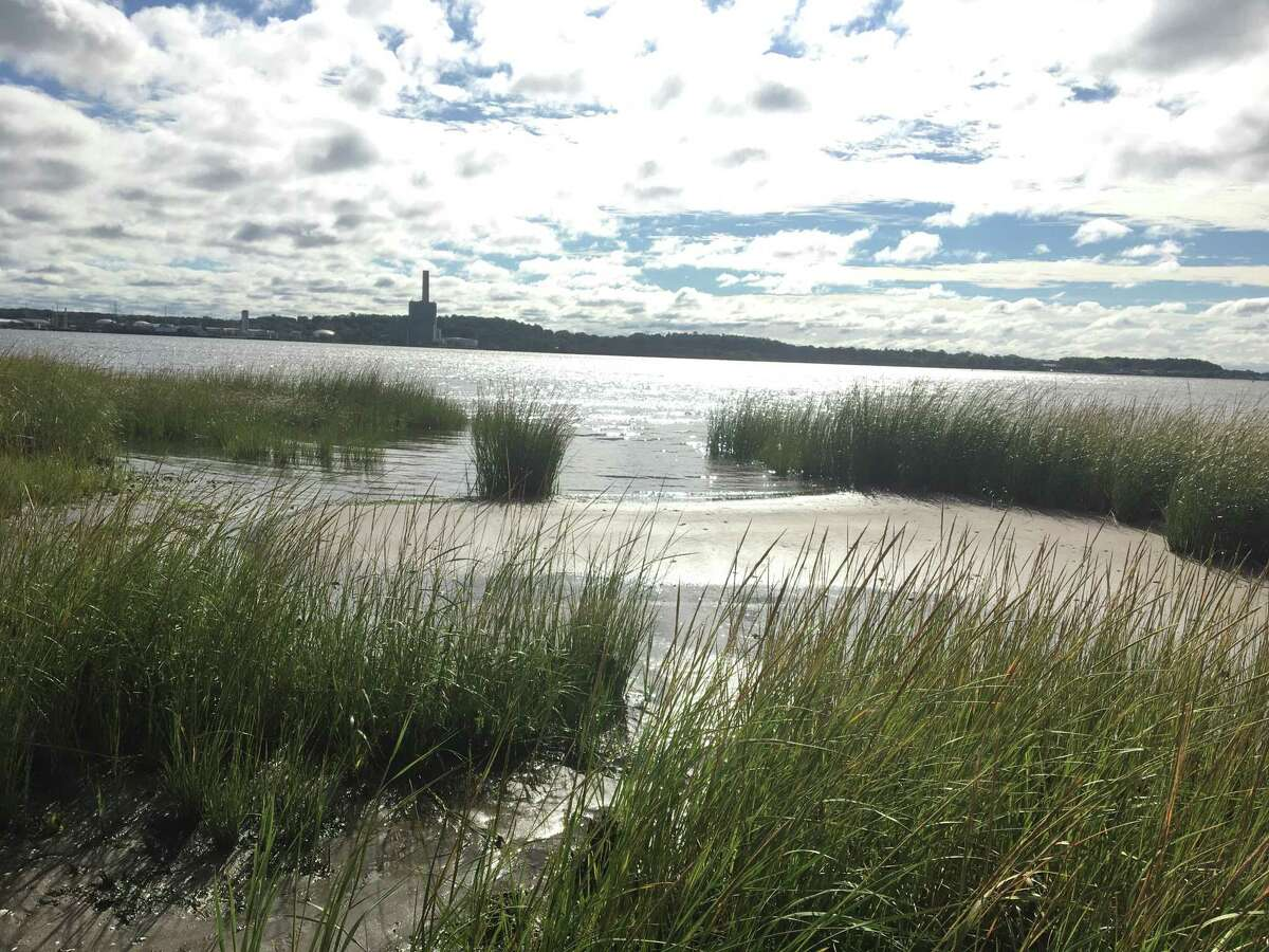 The New Haven Land Trust's Long Wharf Nature Preserve Sept. 2, 2021.