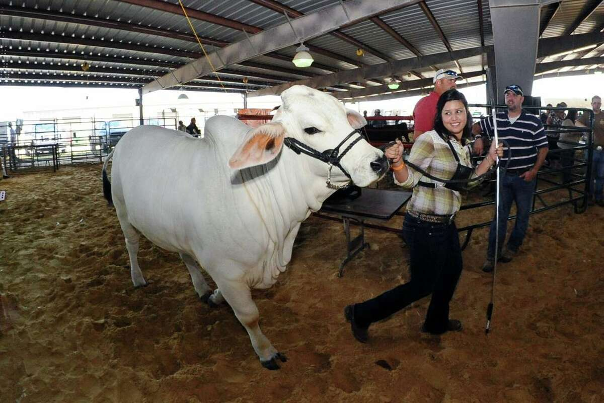 """Dianna Martinez and """"Lady Dianna"""" make their way into the arena for judging during the Pasadena Livestock Show and Rodeo in 2012. Last year, the PLSR raised half a million dollars for students' scholarships and continuing education in Pasadena ISD despite many events being canceled."""