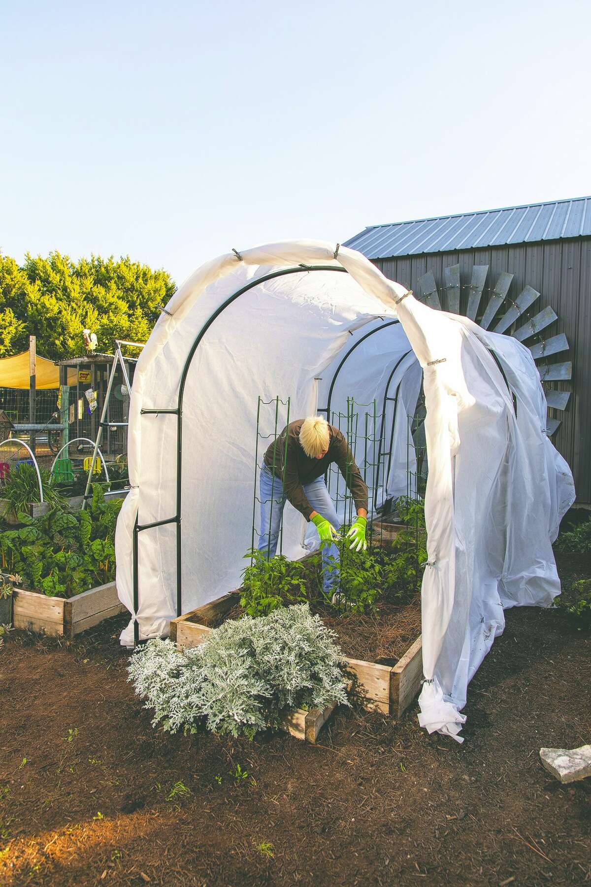 High tunnel systems with hoops and row covers work well on garden beds filled with large plants, allowing easy access for harvesting while protecting the plants.