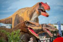 More than 70 photorealistic dinosaurs are ready to excite dinosaur fans at the Jurassic Quest drive-thru coming to Midland this month. The nation's largest and most realistic dinosaur experience will be in town Sept. 10 to 19 at the Midland Horseshoe.