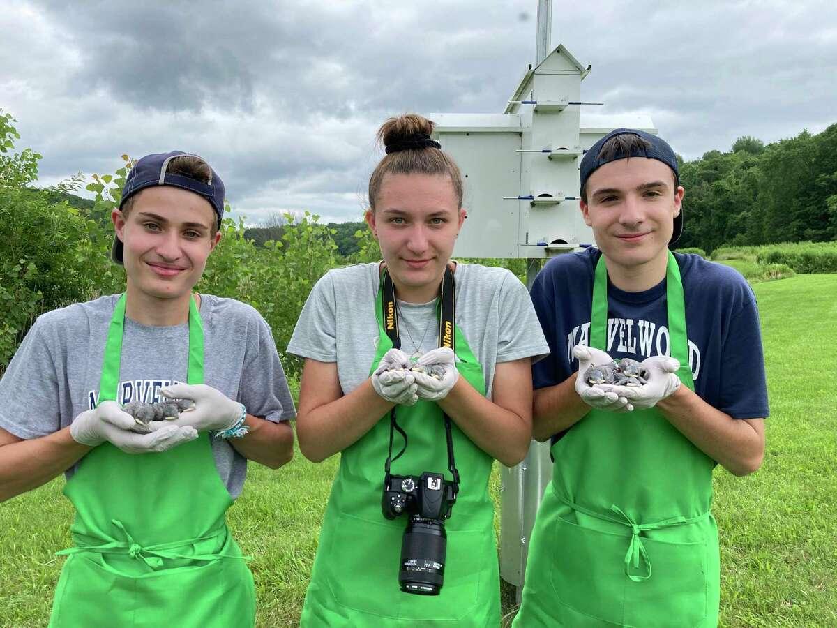 Aiden Cherniske, Ashley and Brennan WilkensAident preparing to return purple martin nestlings after banding.
