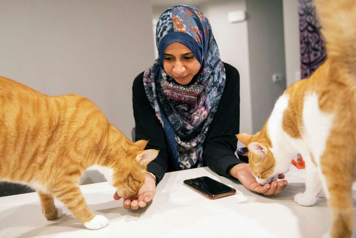 Attorney Zahra Billoo feeds her cats, Justice (left) and Peace, while working from home in Milpitas.