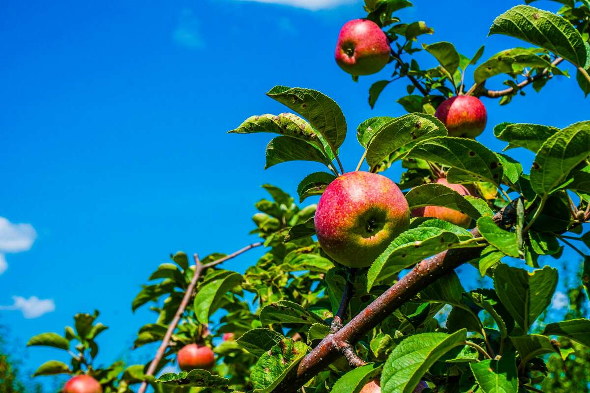 Just because it's fall doesn't mean you have to pick your own apples. Pay a visit to an orchard that offers other attractions - like live music and food - and buy a bag of apples to go.