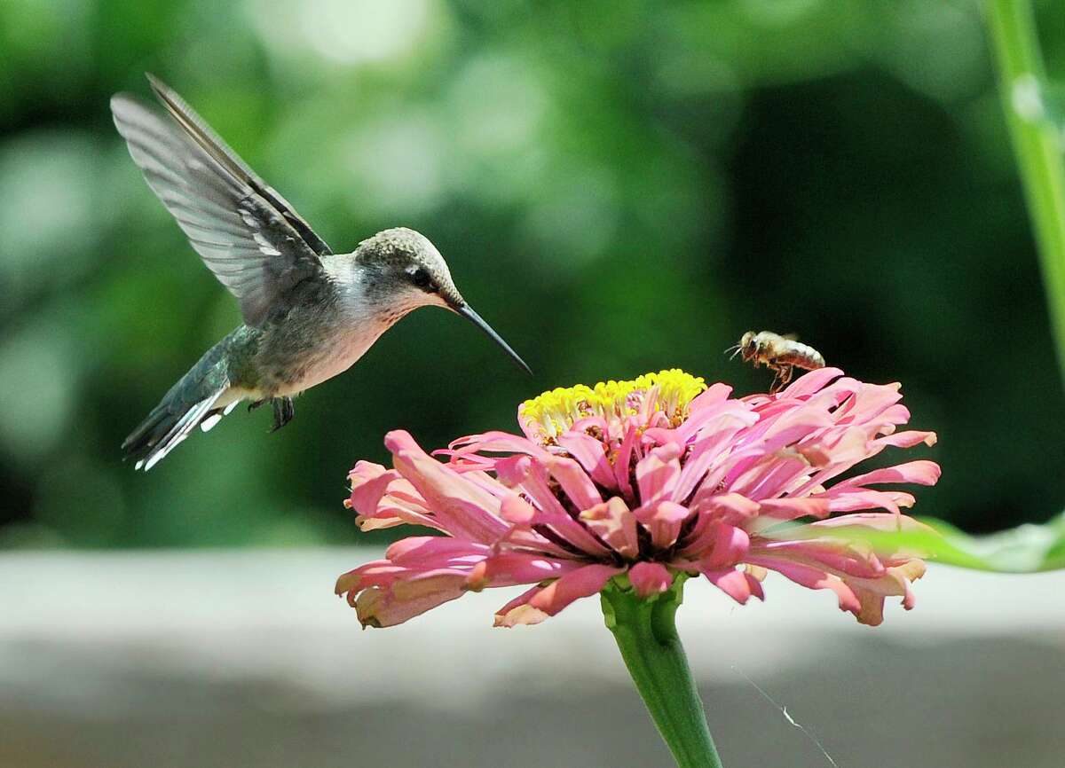 Harris County Pct. 3 presents a Hummingbird Festival at Kleb Woods Nature Center on Sept. 11.