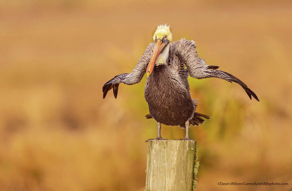 Finalist photograph from the Comedy Wildlife Photography Awards 2021.