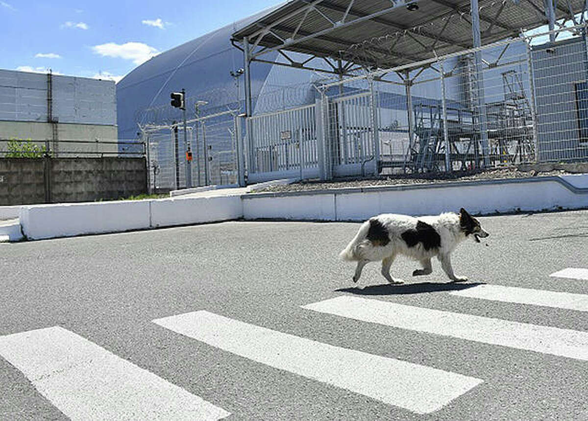 A stray dog walks past the confinement covering the fourth block of the Chernobyl nuclear power plant. The long, one-story structure once served as a makeshift medical center for workers from the plant to receive assistance after the 1986 disaster.