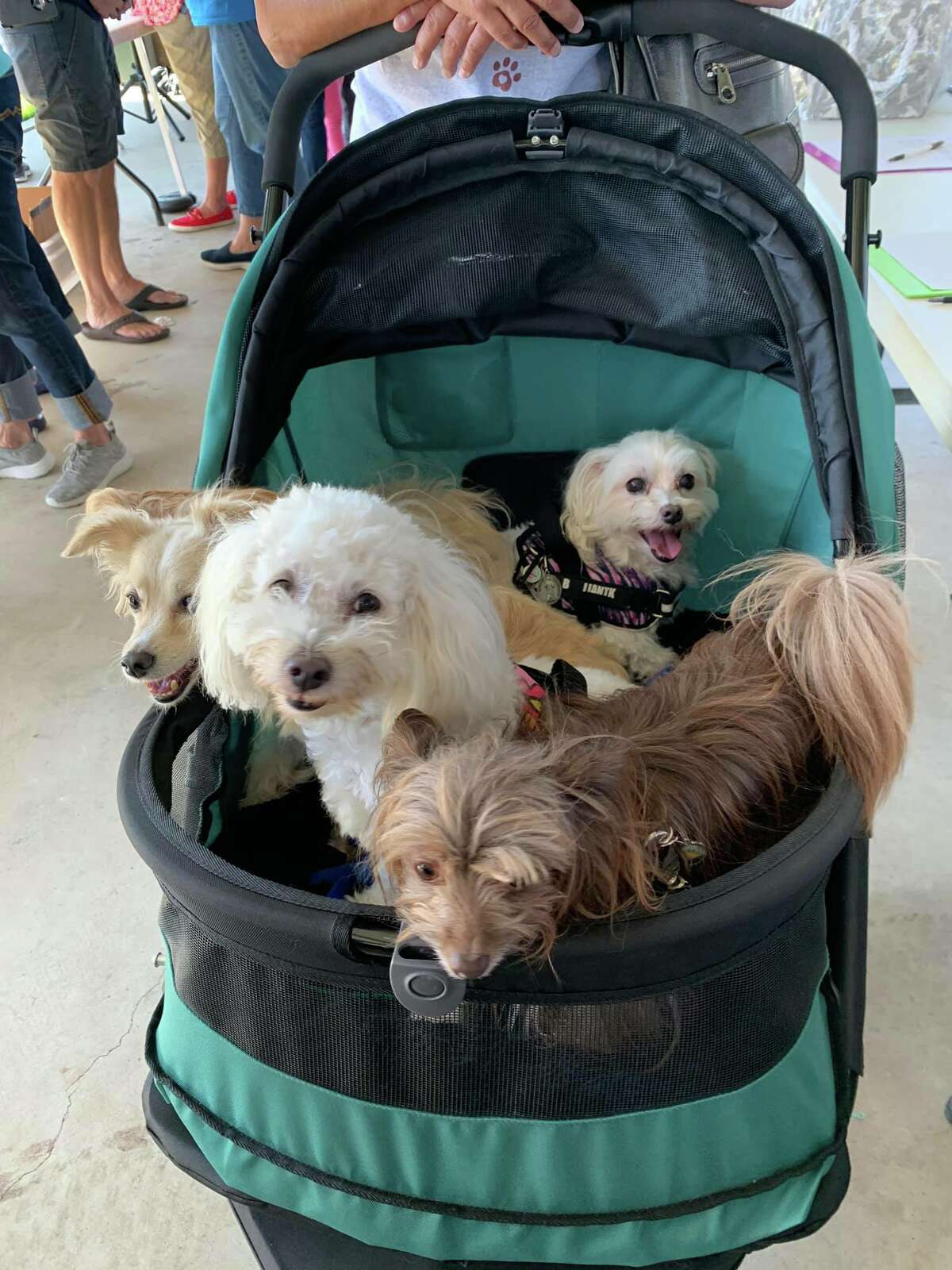 Dogs will be everywhere at Barktoberfest, set from 10 a.m. to 3 p.m. Oct. 9 at Jackie's Brickhouse, 1053 Marina Bay Drive in Kemah. The event will feature live music, food, a silent auction, pet competitions, low-cost vaccines and microchipping, demonstrations and dog adoption opportunities. Admission is free, and proceeds help Bay Area Pet Adoptions No Kill Shelter. For more info, visit https://bityl.co/8bTk.