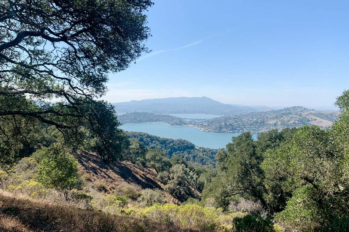 The view looking out toward Tiburon and Mount Tamalpais while hiking the North Ridge Trail to the Sunset Trail that goes up to MountLivermore on Angel Island on Sept. 8, 2021.
