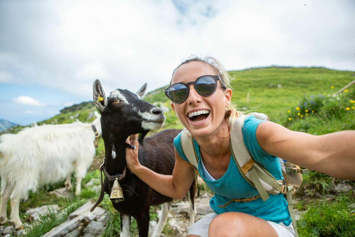 Book your spot to hike with a friendly herd of goats that belong to a group called Dream Goats.