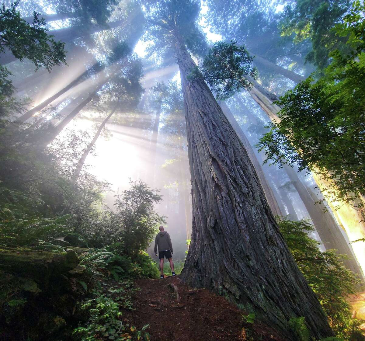 Nate Berg admires the light streaming through the trees on the Damnation Creek Trail in Redwood National Park.