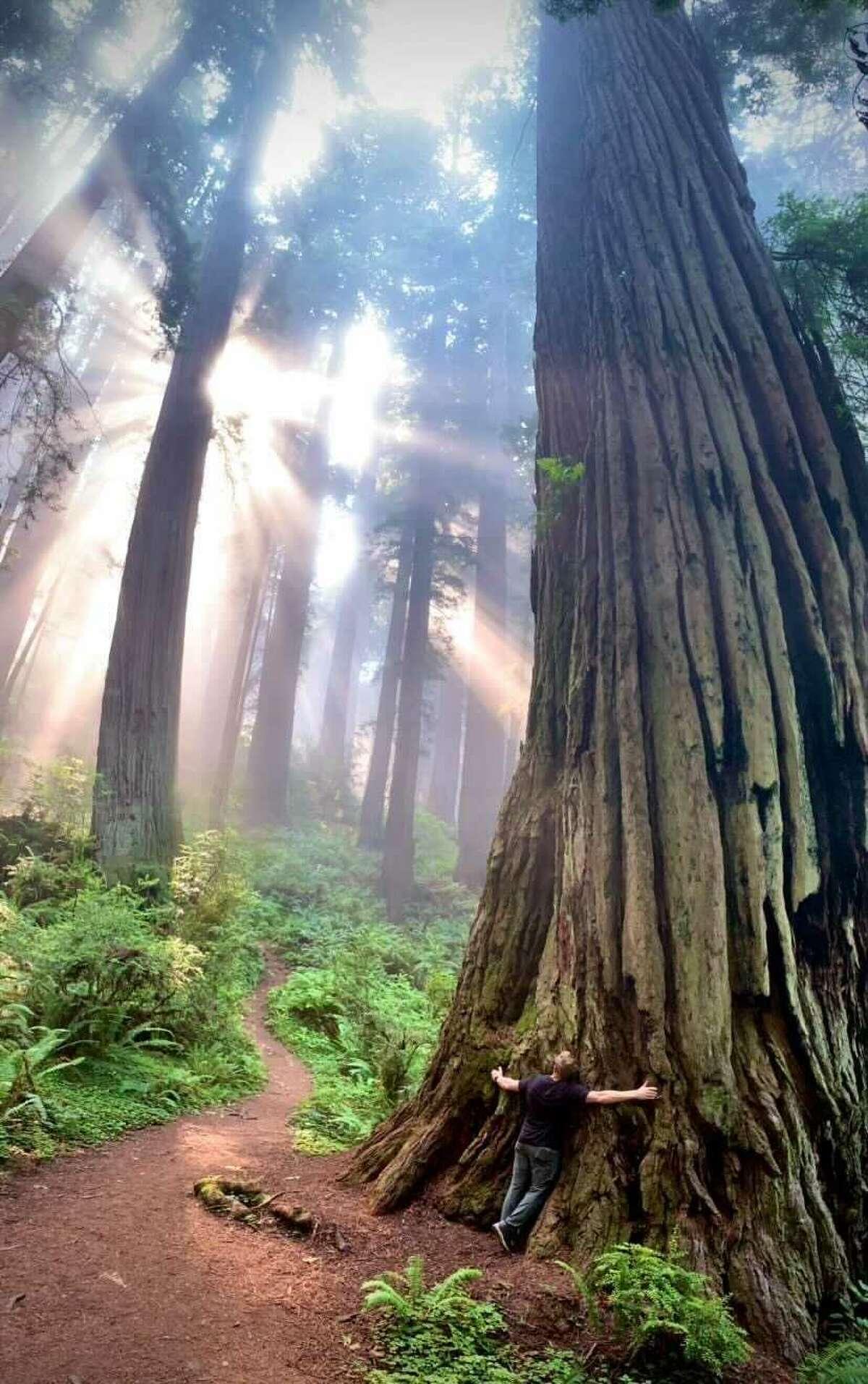 Mitch Crispe kisses a redwood tree on the Damnation Creek Trail.