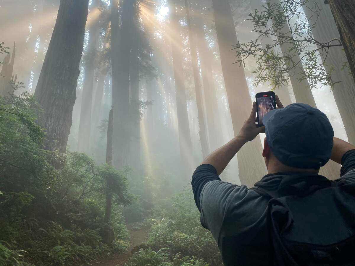 Steven Sparapani takes a photo of the light show on the Damnation Creek Trail.