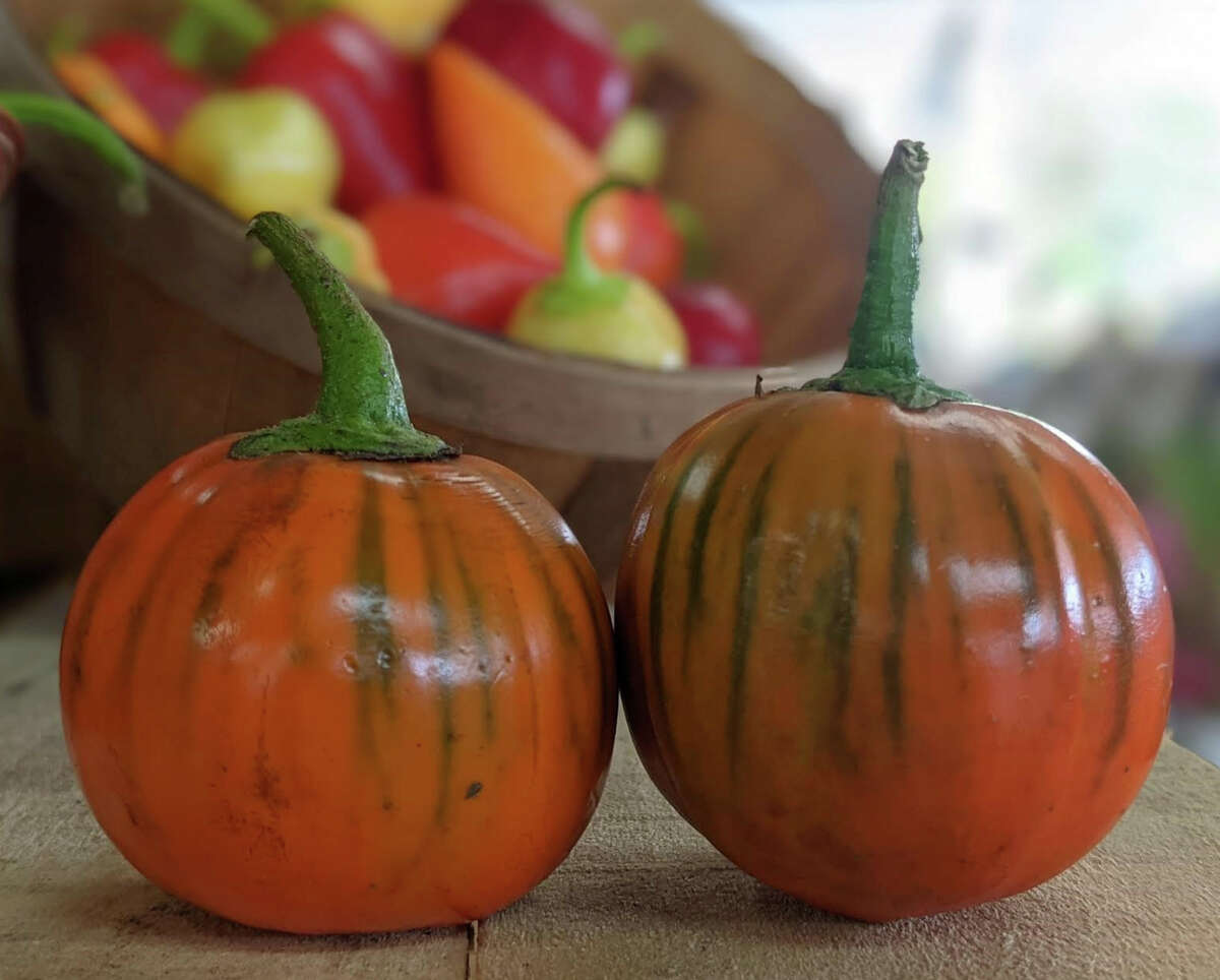 Markedly different in size and physical appearance from its more familiar purple cousin, Turkish eggplant is becoming more popular at local farmers markets, farm stands and specialty markets.