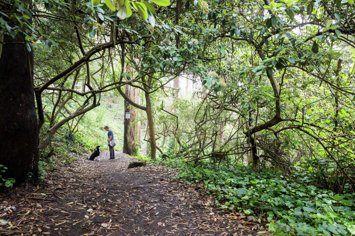 A man and his dog go for a walk on Mount Sutro on Sept. 10, 2021. The hiking trails on Mount Sutro provide a natural respite in the middle of San Francisco.