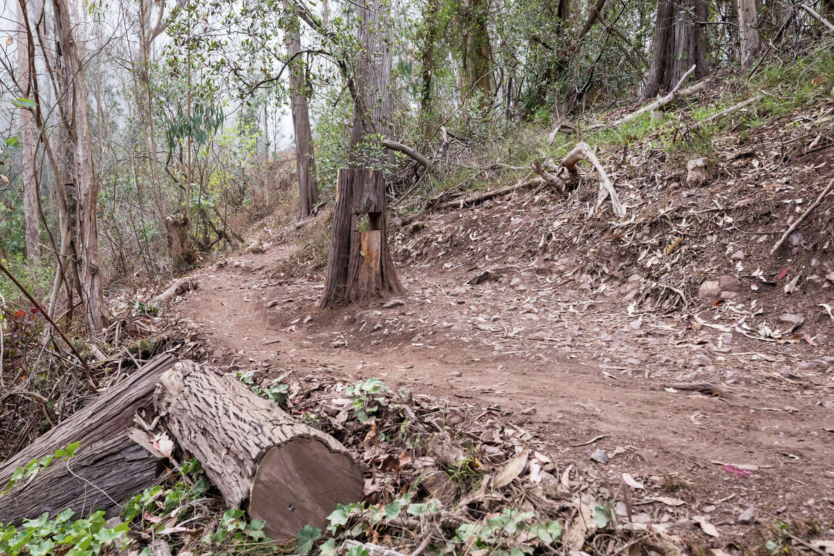 Trees that have been cut down on Mount Sutro on Sept. 10, 2021. The hiking trails on Mount Sutro provide a natural respite in the middle of San Francisco.