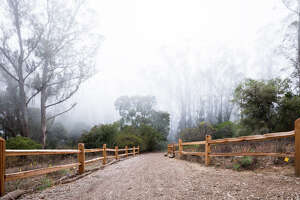 The hiking trails on Mount Sutro provide a nature respite in the middle of San Francisco.