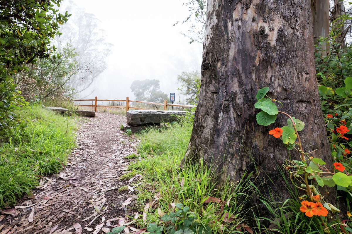 A trail heads to the top of Mount Sutro on Sept. 10, 2021. The hiking trails in the Mount Sutro Open Space reserve provide a natural respite in the middle of San Francisco.