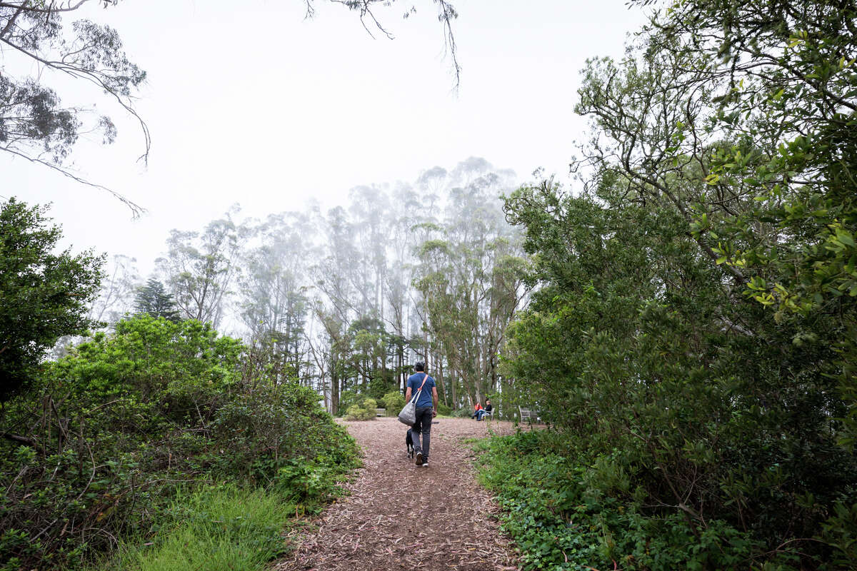 A hiker makes it up to the top of Mount Sutro on Sept. 10, 2021. The Mount Sutro Open Space reserve provides a natural respite in the middle of San Francisco.