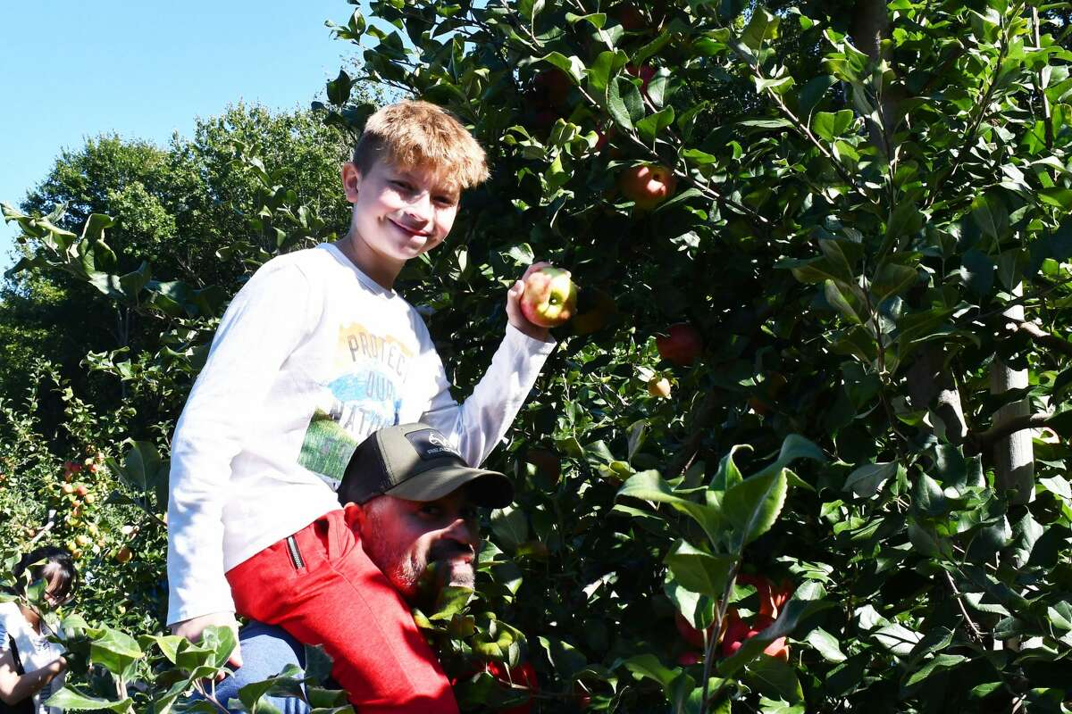 Beardsley Cider Mill opened its pick-your-own apple season on Saturday, Sept. 11, 2021 at their Shelton, Conn. orchard. Honeycrisp, Gala and McIntosh apples were available for guests to pick fresh from the fields. Were you SEEN?
