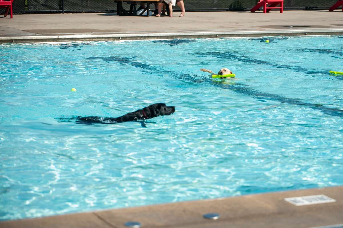 Dogs swim at Plymouth Pool during the Pooches at the Pool event on Sept. 11, 2021. This event marks the end of the pool's season.