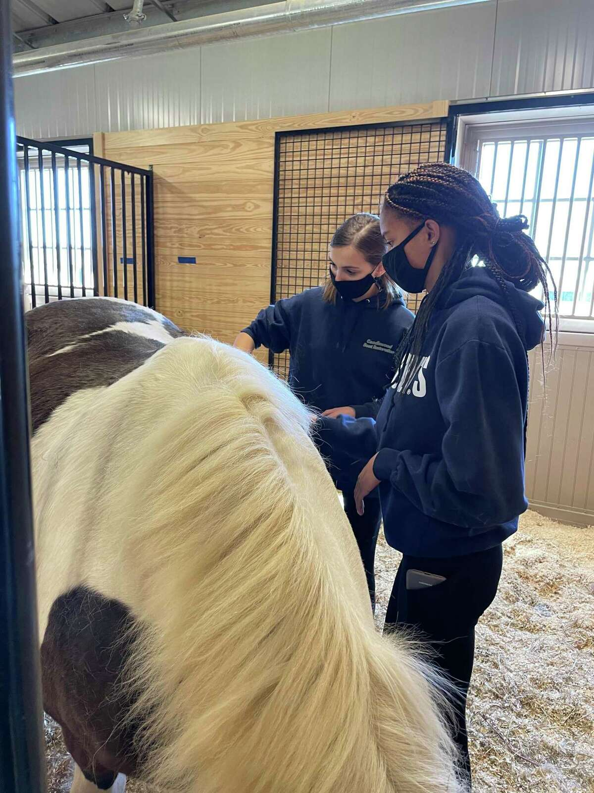 Morgan Farrison (front) and Gianna Campbell (rear), eleventh grade a students, grooming Lucy before Little Britches Therapeutic Riding instruction