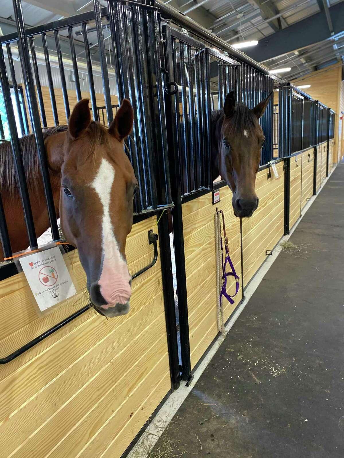 Horses in Shepaug Valley School's Agriscience Program