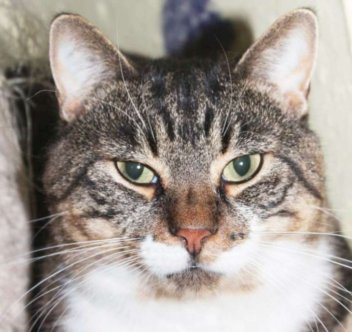 Catales of Middletown has Milo up for adoption.