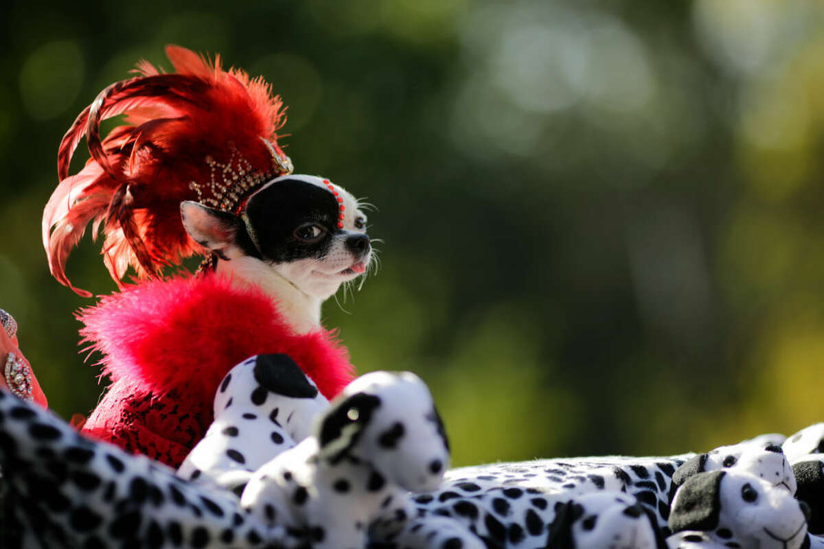 Treat your pup to the perfect dog Halloween costume.